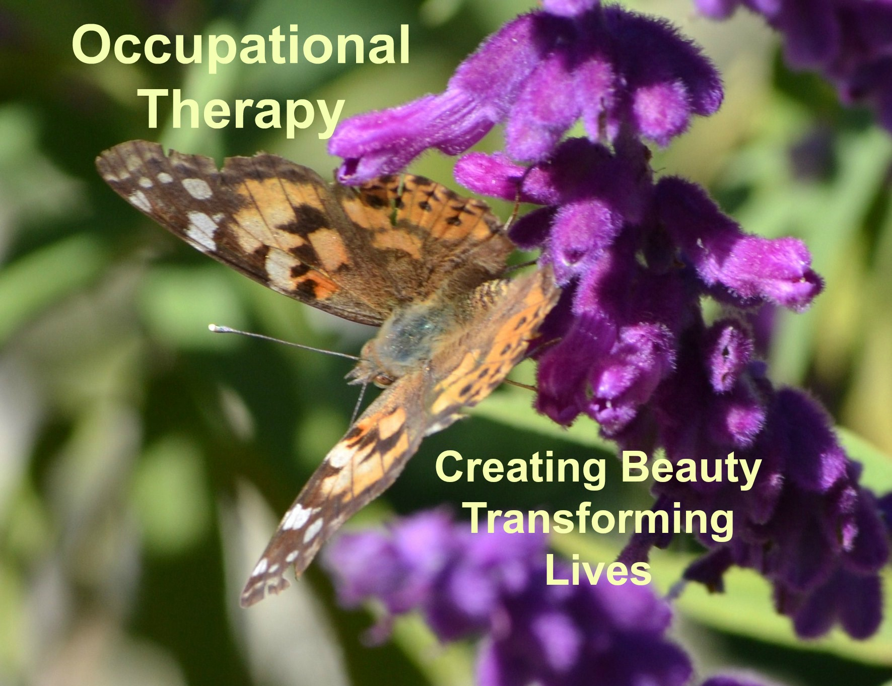 Occupational Therapy – Growing good things.